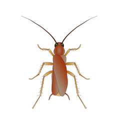 blattella germanica cockroach sketch of vector image