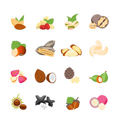 cartoon color nuts icons set vector image