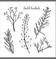 Healing field herb plants isolated on white vector
