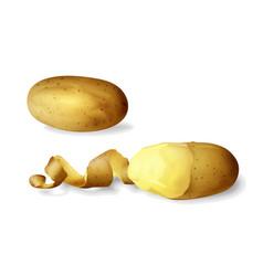 Potato peeled 3d isolated vector