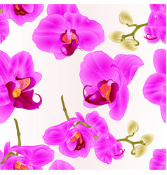 Seamless texture orchids phalaenopsis closeup vector