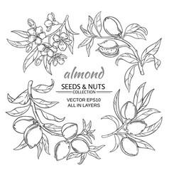 almond set vector image