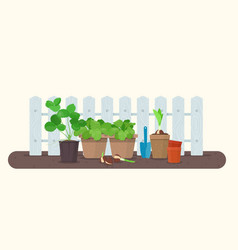 Seedlings in plastic and biodegradable peat pots vector