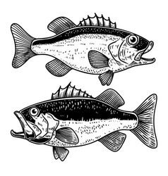 bass fish in engraving style design element vector image