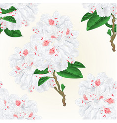 Seamless texture twig white flower rhododendron vector