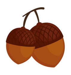 nuts fruits isolated icon vector image