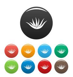Aloe plant icons set color vector