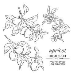 Apricot set vector