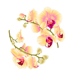 Branches orchids yellow flowers tropical plant vector