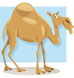 dromedary camel cartoon vector image