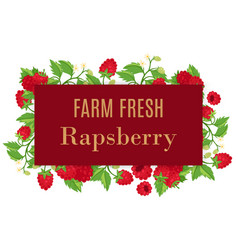 fresh farm raspberry whole with leaves and flowers vector image
