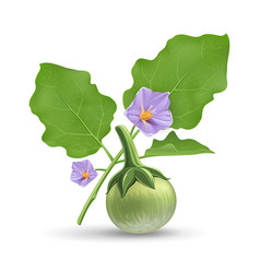 Thai eggplant and green leave with purple flower vector