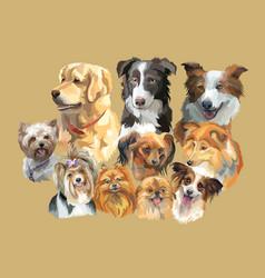 fluffy dog breeds vector image