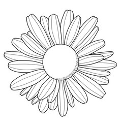 chamomile flower outline black silhouette vector image