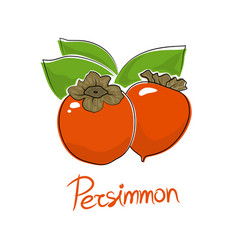 Persimmon isolated on white background vector