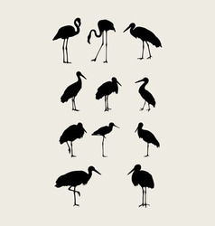 Stork and Heron Silhouettes vector image