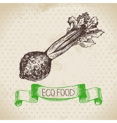 Hand drawn sketch celery vegetable Eco food vector image vector image
