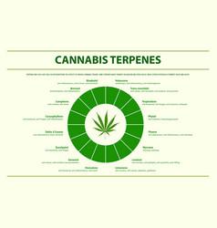 Cannabis terpenes horizontal infographic vector