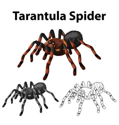 Doodle character for tarantula spider vector