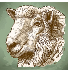 Engraving head of sheep retro vector