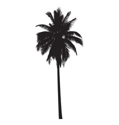 Graphic palm tree vector