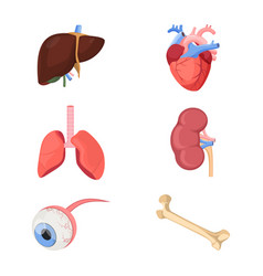 medical human organs realistic heart two lungs vector image vector image