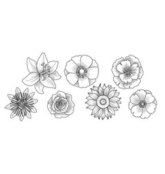 drawing set flowers vector image