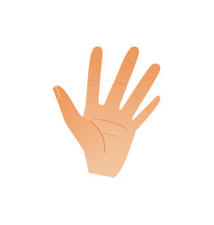 human hand showing five fingers isolated on white vector image