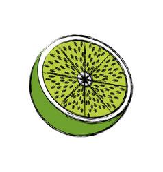 Lemon citrus fruit fresh half vitamin vector