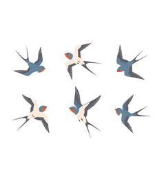 set swallows birds in flight vector image