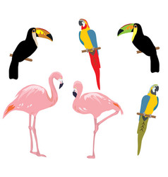 tropical birds vector image