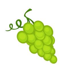 a bunch of green grape vector image vector image