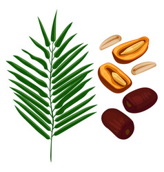 delicious ripe dates fruits and green palm branch vector image vector image