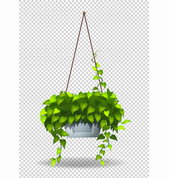 Potted plant hanging on wall vector