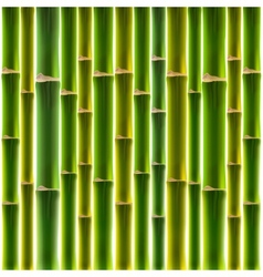 Green bamboo fence background vector image vector image