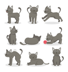 cartoon characters tabby cat set vector image