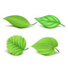 Collection of realistic green leaves set vector