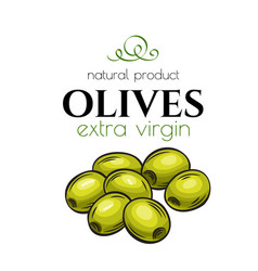 Hand drawn olives icon badge vector