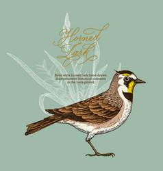 Retro style horned lark vector