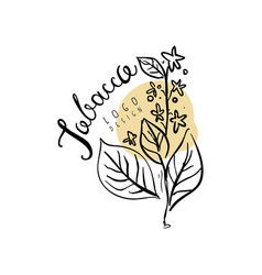 Tobacco logo hand drawn design element with plant vector