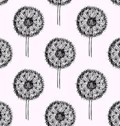 Sketch dandelion pattern vector image