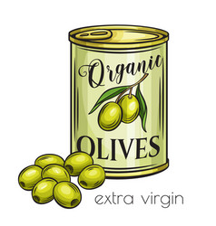 Canned olives in tin can vector