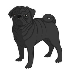 Color image of a black pug vector
