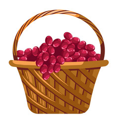 Grapes harvest in basket winemaking and farm vector