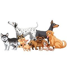 Group of different kind of dogs vector image