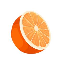 half of fresh orange fresh citrus fruit healthy vector image