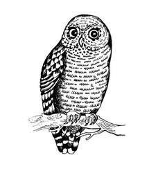Owl bird engraving vector