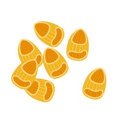 Pipette rigate pasta uncooked italian pasta vector