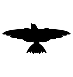 swallow on white background vector image