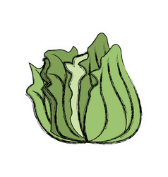 Cabbage vegetable nutrition food fresh product vector